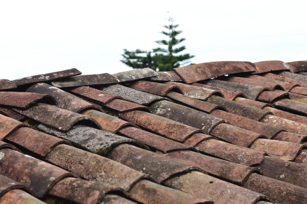 Mousse sur toiture