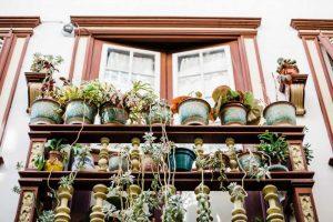 Plantes balcon cactus