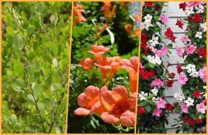 collage plante peu entretien