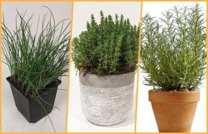 collage plante utile