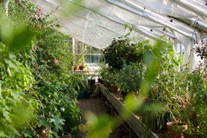Serre avec jardin et arbustes