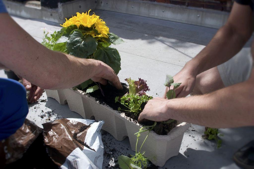 Plantes balcon