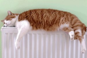 chat tranquille radiateur
