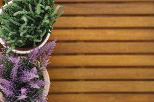 plantes terrasse bois