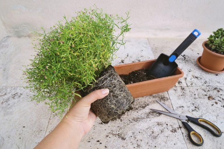 Faire ses jardinières