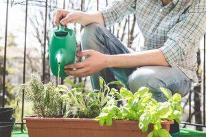 Plantes aromatiques jardinière balcon
