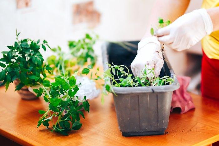 Préparation jardinière