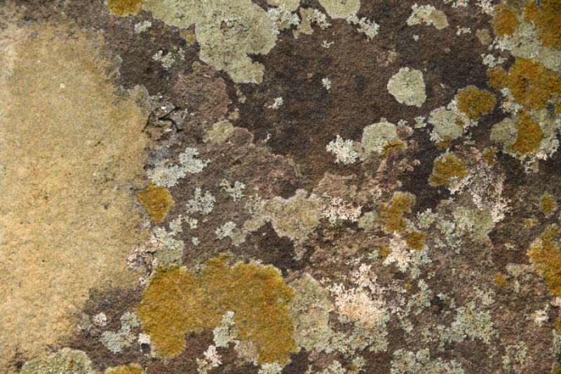 Lichen sur mur en pierre