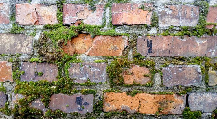 mousse lichen mur ancien