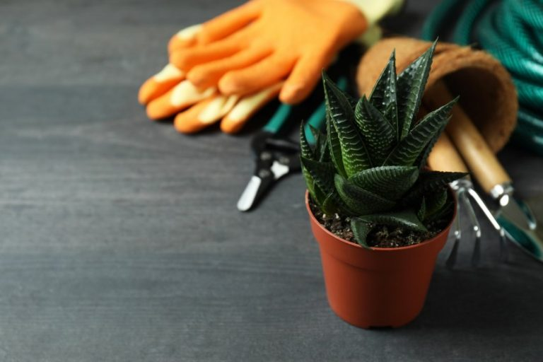outils jardin bricolage